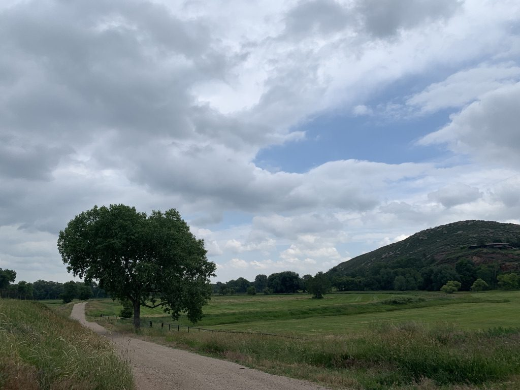 A pastoral seen with a dirt road heading off into the distance at left with a tree beside it and a grassy field to the right.